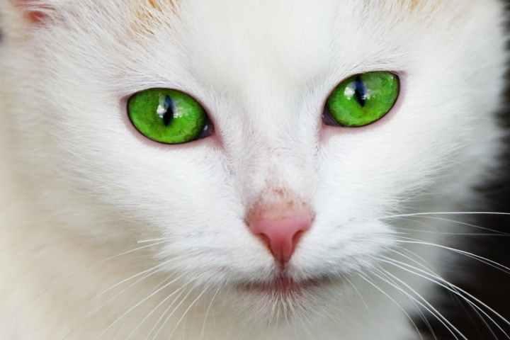 animal-cat-domestic-eye-87413.jpeg