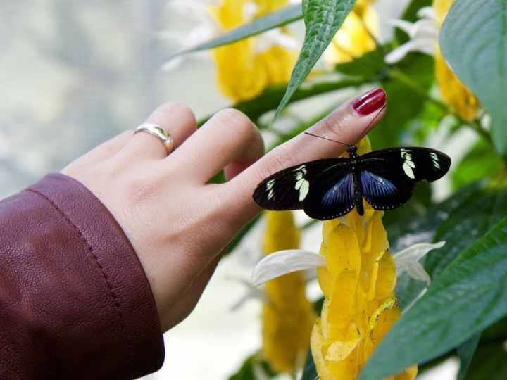 5 Tips for Networking Even if You're Not a SocialButterfly